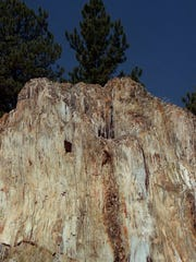 One of several exposed petrified redwood stumps stands defiant against time at Florissant Fossil Beds National Monument.