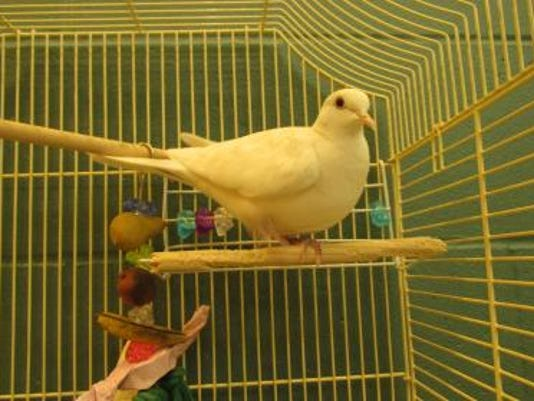 636003160296697129-WDH-0606-Pet-of-the-Week-Paco.jpg
