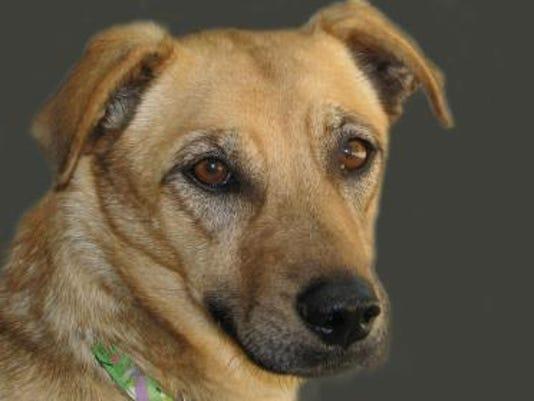 shelter dog Macy