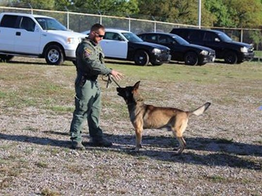 Kimbo is seen during some training exercises. The WCSO K-9 is retiring after 8.5 years of service.