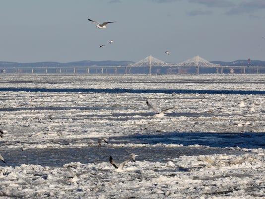 Seagulls, ice, Cuomo Bridge