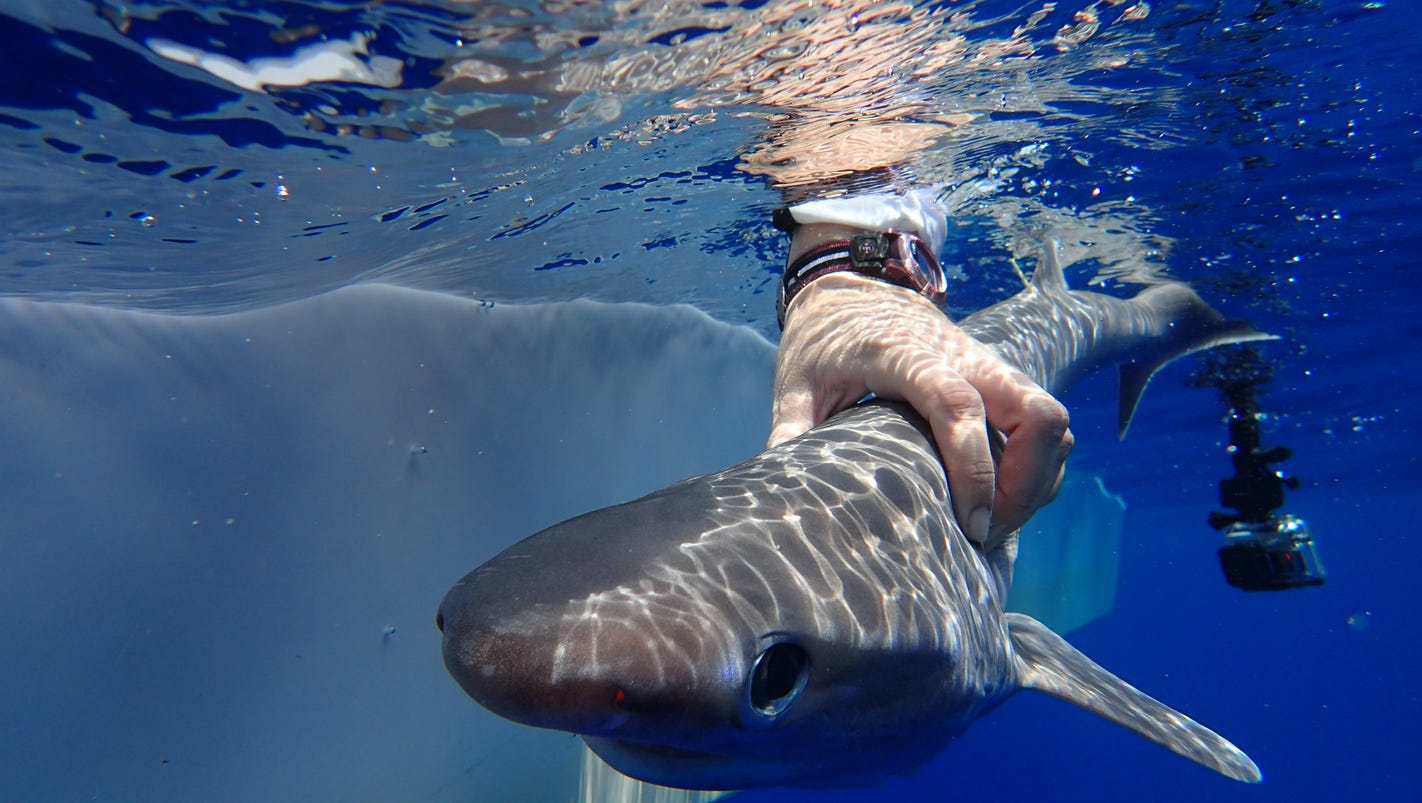 New shark species discovered by research team led by Florida Tech professor