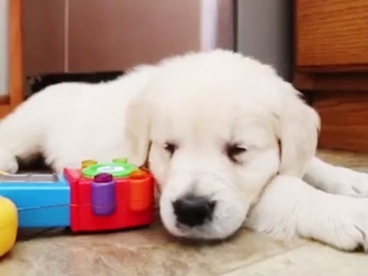 March 23 is National Puppy Day. View heartwarming puppy videos. Their stories will brighten your day.