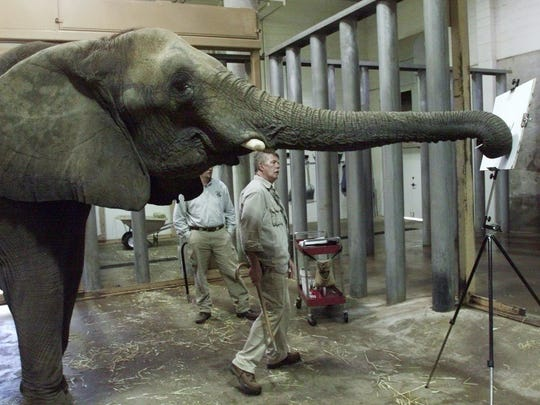 FILE: Nineteen-year-old Hadari, a female African elephant, paints while her handler, Chuck Pankow, keeps an eye on her work Dec. 14, 2001.