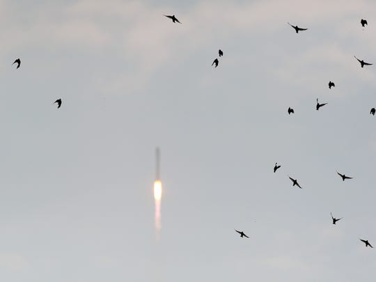 A flock of birds scatter after being startled by the sound of Orbital's Antares rocket launching from the Mid-Atlantic Regional Spaceport at Wallops flight Facility on sunday, July 13, 2014. The rocket is carrying the Cygnus spacecraft which will send supplies to the International Space Station.