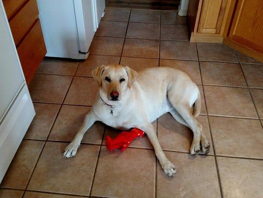 Grace stolen dog photo