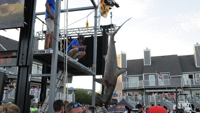 The MJ's brought in a  260.5 pound hammerhead shark caught by J.D. Messler. During the 3rd day of the 43rd Annual White Marlin Open in Ocean City, Md.