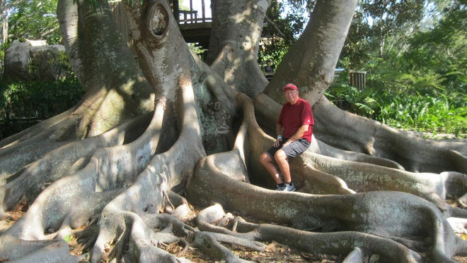 Dave Hayes explores the root system of a tree at the Marie Selby Botanical Gardens in Sarasota, Florida.
