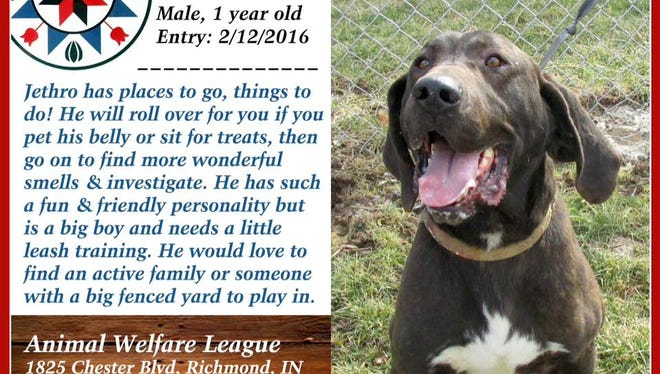 Jethro is available for adoption from Animal Welfare League.