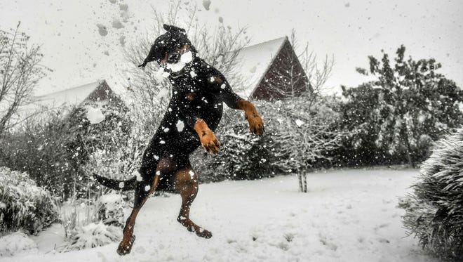 A dog jumps to catch a snowball in Godewaersvelde on Dec. 11, 2017.