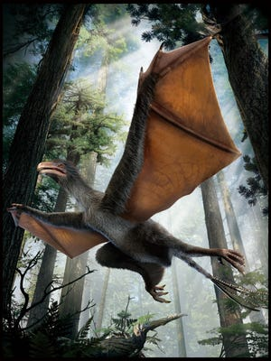 Scientists say they discovered a batlike winged dinosaur fossil. It's possible that it used its wings to glide.