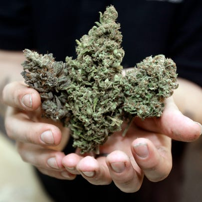 Three types of marijuana buds are shown at Med Grow