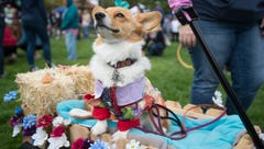 What to know ahead of this year's Tour de Corgi