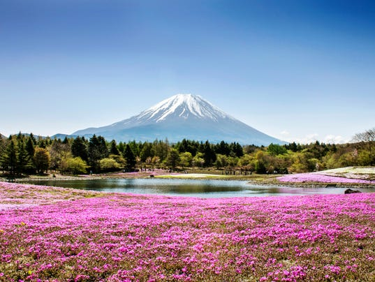 Field of flowers by a lake overlooking Fuji Mountain