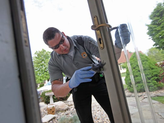 First Class Frank Fitzwater, Jr., with the New Castle County Police Department, dusts the storm door of a house where a burglary by a known heroin addict occurred.