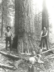 Lumberjacks use a whipsaw; circa 1890.