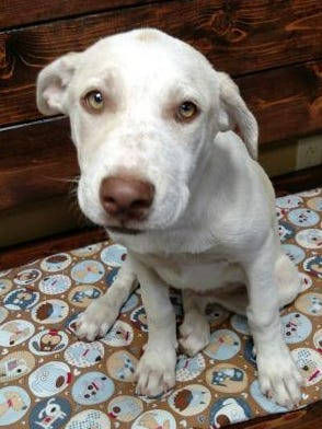 Meet the Current-Argus pet of the day, Deena.