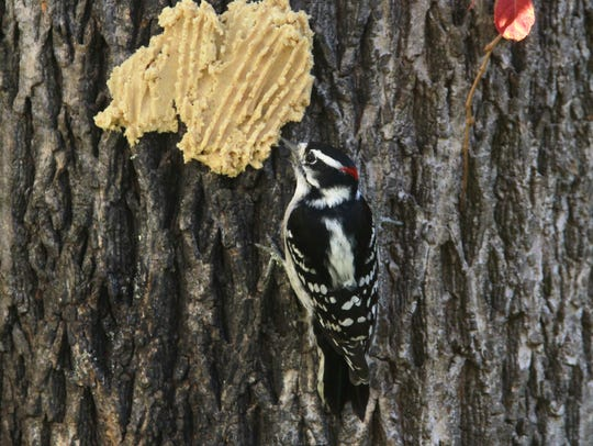 Numerous birdseed mixes are sold so humans can help