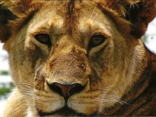 0314-safari-1a8.jpg