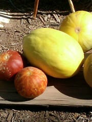 Charentais, Tigger, Crenshaw and Galia melons from Duncan Trading Company.