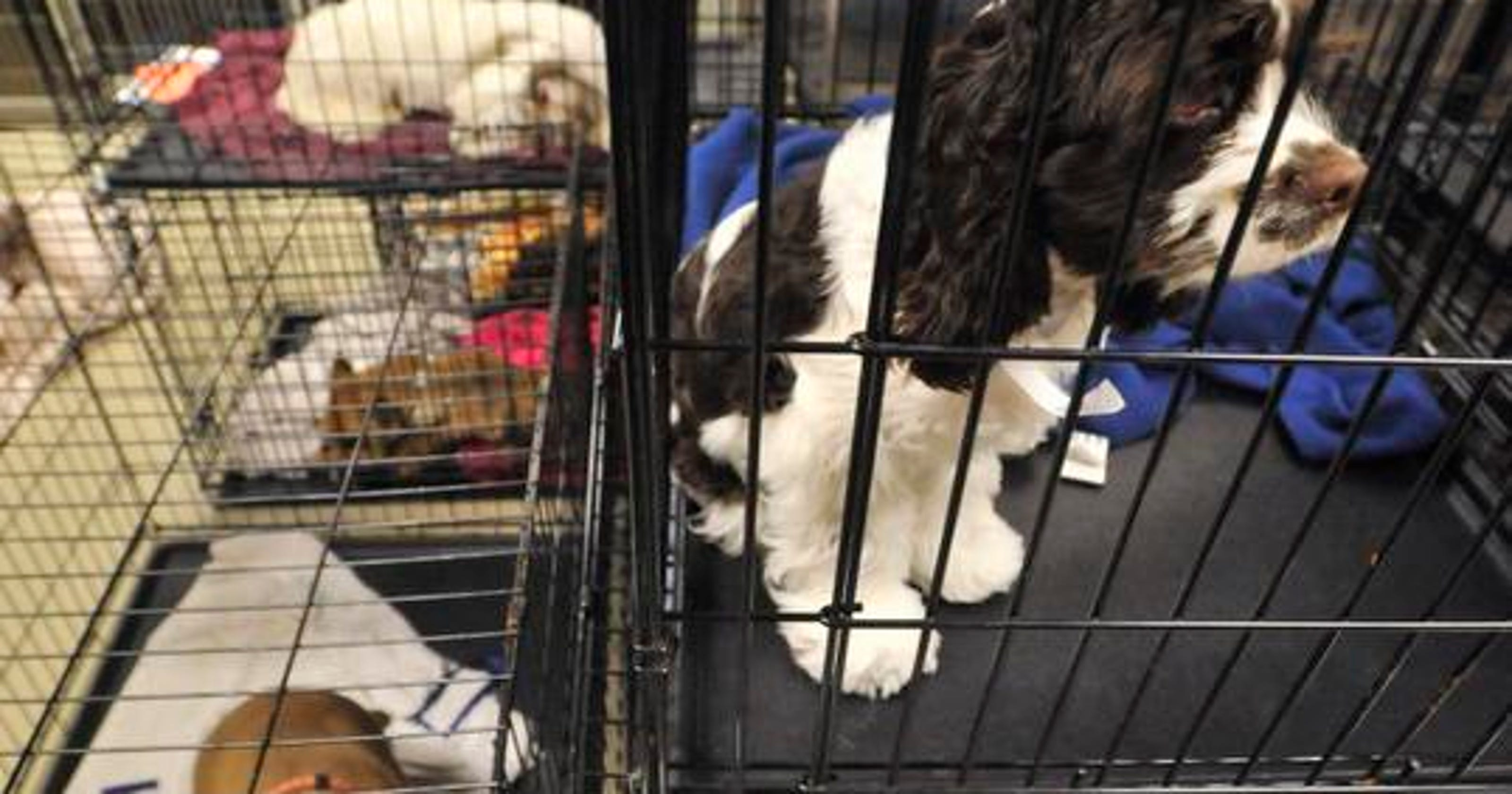 Spay Neuter Clinic Opens Today In Brownsburg