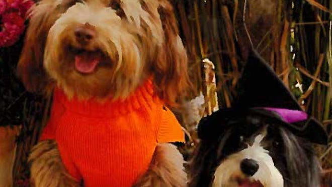 Charlie and Daisy entered last year's pet costume contest at Liberty Township's Fall Festival.