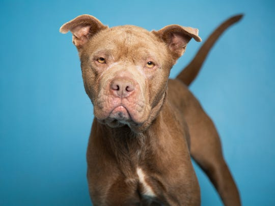 Aubrey is available for adoption at 9226 N. 13th Ave.