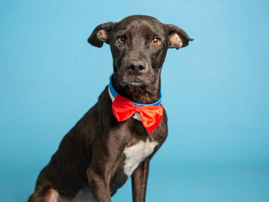 Linus is available for adoption at the Arizona Humane