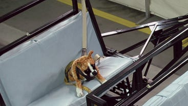 Dog dummies were crash tested at a private facility in Virginia used for government crash tests