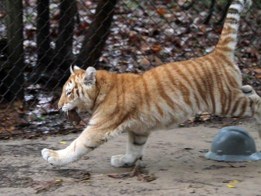 zoo of acadiana in broussard by leslie westbrook december 17 2012 ...