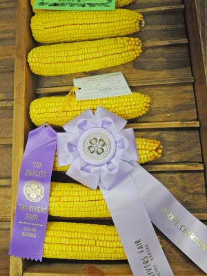 4-Her Matthew Redden received the 4-H spotlight award for knowledge of his crop, along with receiving a purple ribbon and a reserve champion ribbon, at the Tri-Rivers Fair last year.
