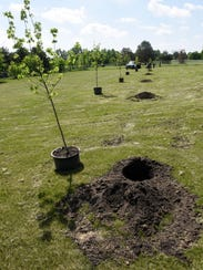 Trees are ready to be planted after a donation by KNOTTY