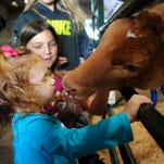 Presley Jones, 2, gets an up close look at a calf during Oregon Ag Fest at the Oregon State Fairgrounds, on Saturday, April 25, 2015, in Salem.