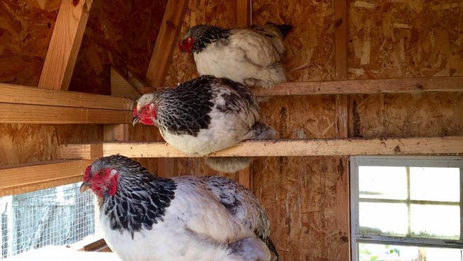 The Tour de Coop offers tours of six chicken coops Oct. 1.