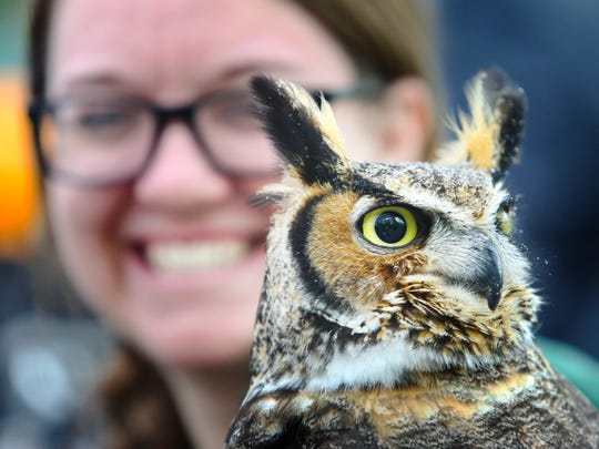 Atticus, a great horned owl, is held by the Brandywine Zoo's Jacque Williamson during animal demonstrations on Earth Day, Saturday at the zoo.
