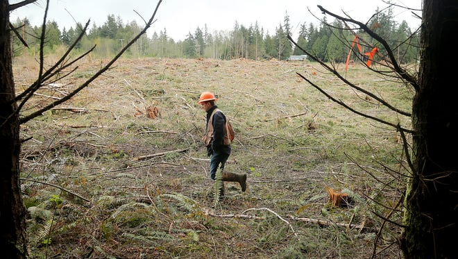 Griffin Chamberlin, Hood Canal area manager for Pope Resources, walks at a timber harvest site near Hansville in April. Pope is delaying its plans to spray herbicides at the site while its permit to do so is appealed.