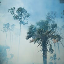 Big Cypress Preserve fires hold at 82,000 acres