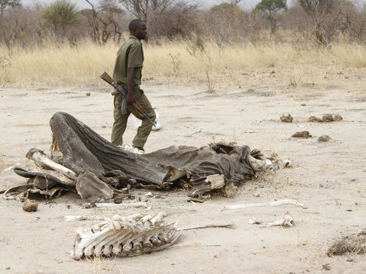 Zimbabwe Elephants Poisoned