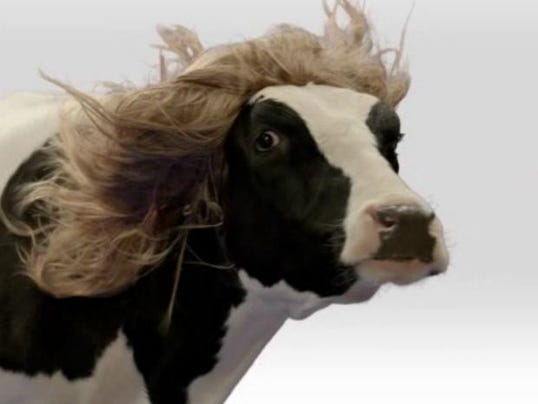 Cows In Wigs Ad Plays Before Cochran Comment Video
