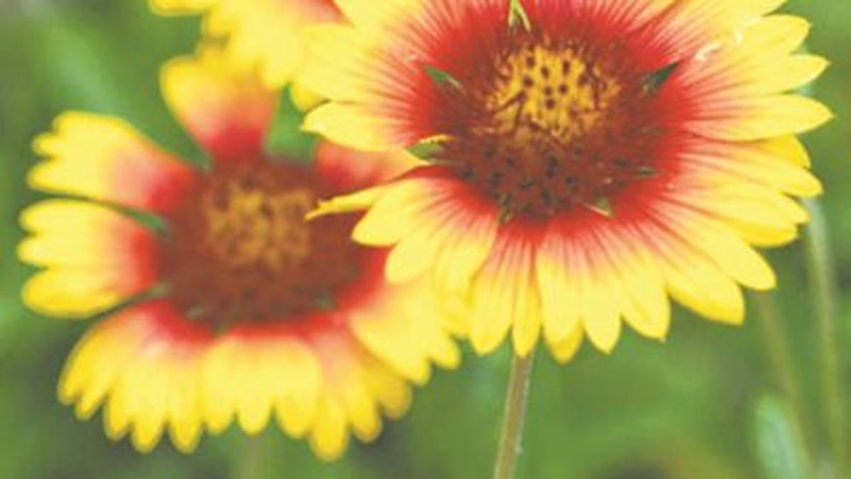 5 Things Best Native Florida Plants To Use For Xeriscaping