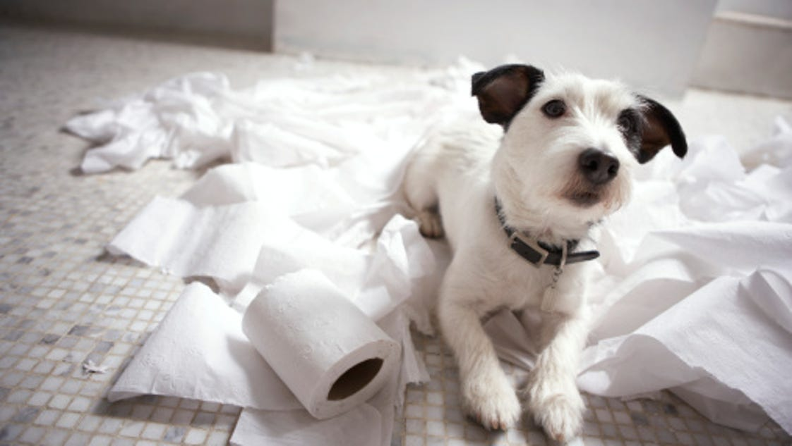 Teach Your Dog To Leave Things Alone