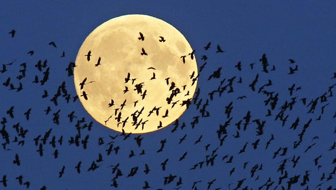 A flock of birds fly by as a super moon rises in Mir, Belarus, on Sept. 27, 2015. A penumbral lunar eclipse will be visible over most of the U.S. Friday evening.