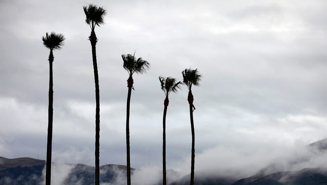 FILE: Palms trees by Tamura & Antle sway in the wind and rain during Salinas storm.
