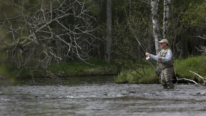 A fly fisherman casts his line in the north branch of the Au Sable River Thursday May 22, 2014.