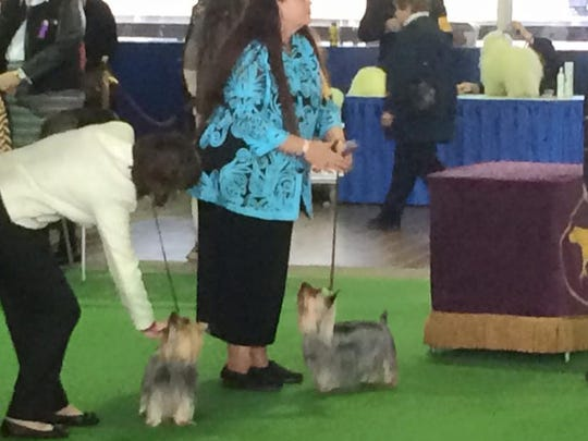Allie, center, in ring with handler Pam Laperruque.