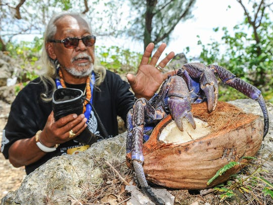 Local hunter John Quidachay demonstrates one of his techniques on how to avoid get pinched while picking up an ayuyu, or coconut crab, during the Festival of Pacific Arts at the Paseo in Hagatna on Thursday, May 26.