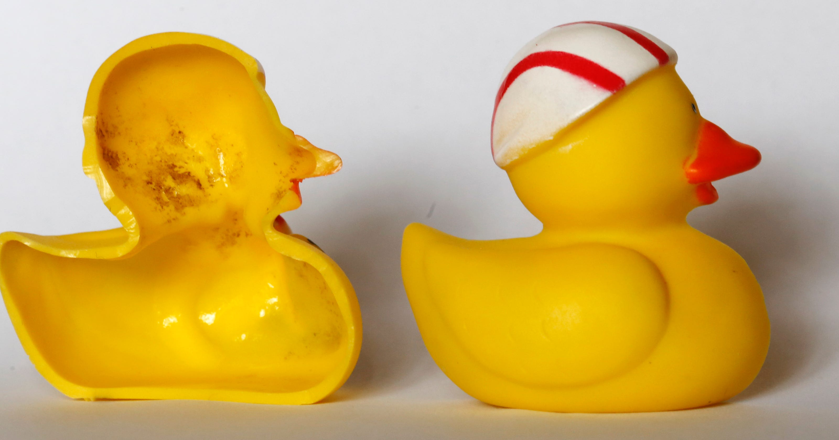 Rubber ducky filled with \'potentially pathogenic\' bacteria, study says