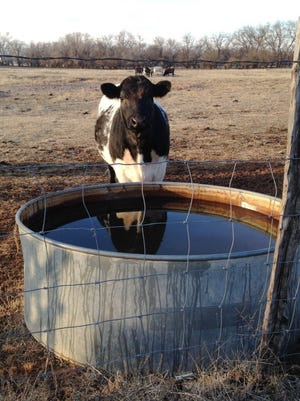 A case of anthrax has been confirmed in a cow in Hardeman County