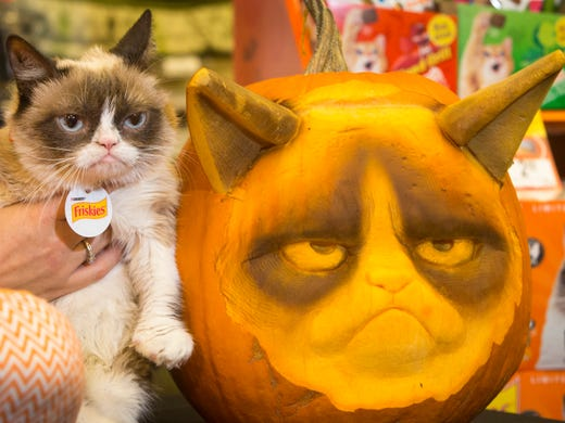 Grumpy Cat, aka Tardar Sauce, shows her familiar and