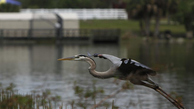 Local water quality projects that would be funded in the budget proposal include about $675,000 to fund the ongoing restoration efforts at Lakes Park in Fort Myers.